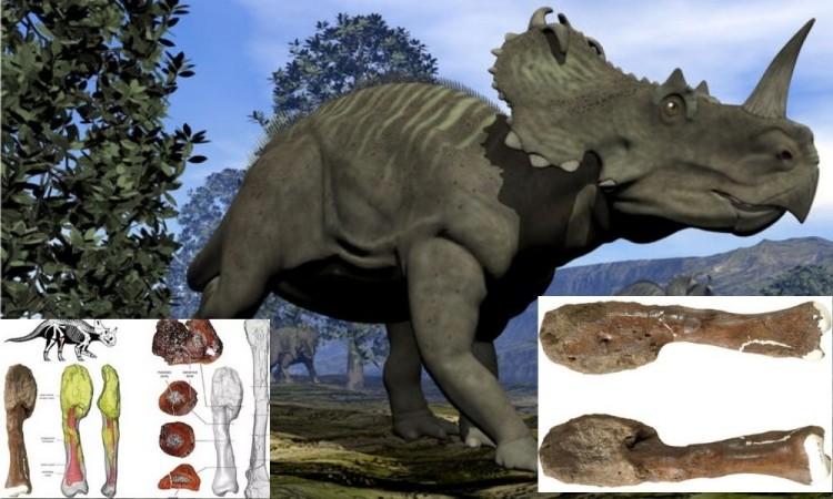 Descubren por primera vez un cáncer maligno en un dinosaurio