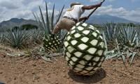 Batalla entre productores mexicanos de Tequila y Heineken vive nuevo capítulo