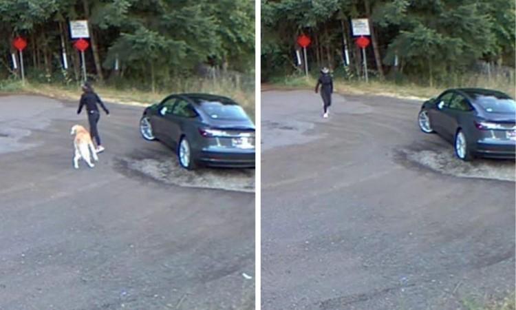 VIDEO: Mujer abandona a su perro en una carretera de EU
