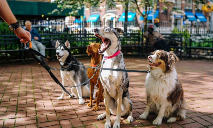 Alemania obligará a pasear a los perros dos veces al día
