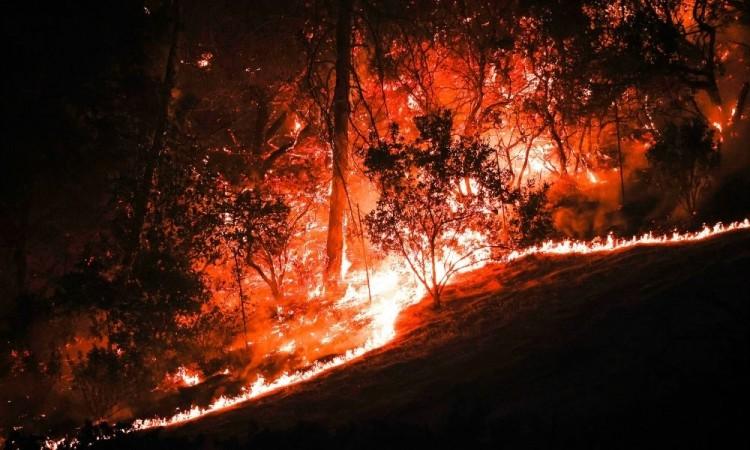 El incendio Glass afecta la zona vinícola de Napa y Sonoma.