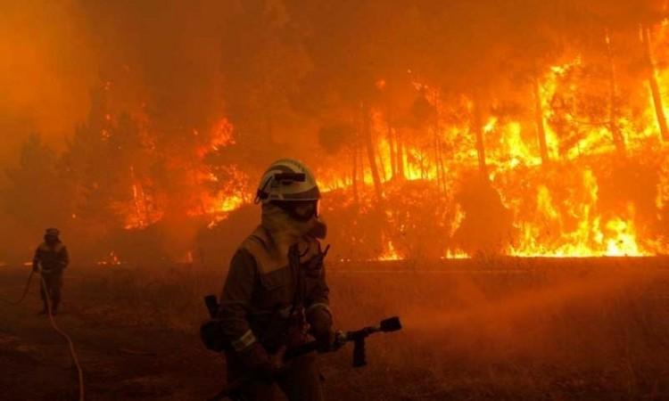 Un incendio forestal se desató recientemente en zonas próximas al Santuario de Elefantes de Brasil.