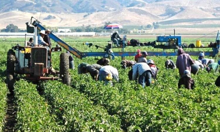 Otros dos trabajadores mexicanos han muerto en Canadá tras contraer la enfermedad.