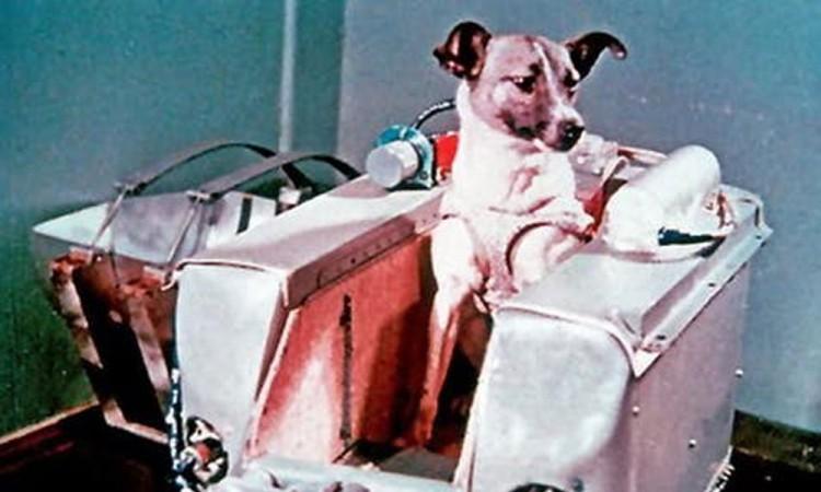 Laika, la perrita lanzada al espacio; una heroína