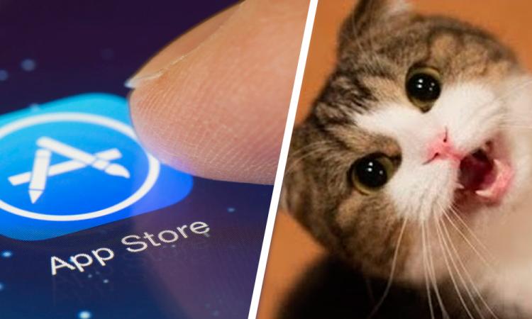 ¿Quieres entender a tu gato? Tienes que descargar esta app