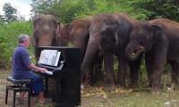 Personas admirables: En Tailandia ofrecen conciertos para elefantes ciegos