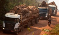 ¿Qué onda Brasil? Decomisan madera talada ilegalmente en la Amazonía