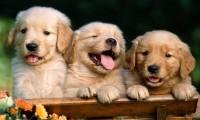 ¡Se salvaron! Llegan a Florida 20 perritos; serían sacrificados en carnicerías en China