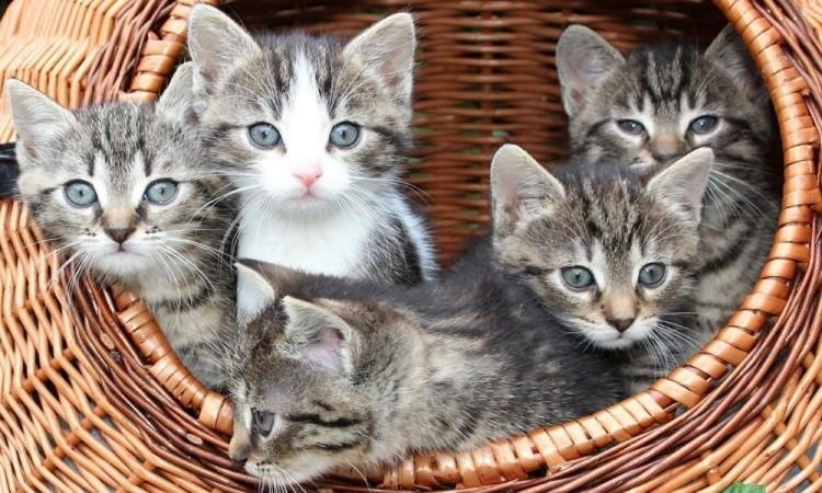 El gobierno realizó una campaña para sacrificar a 2 millones de gatos entre 2015 y 2020.