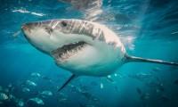 ¡Mágico 2021! Encuentran el tiburón luminoso más grande del mundo en Nueva Zelanda