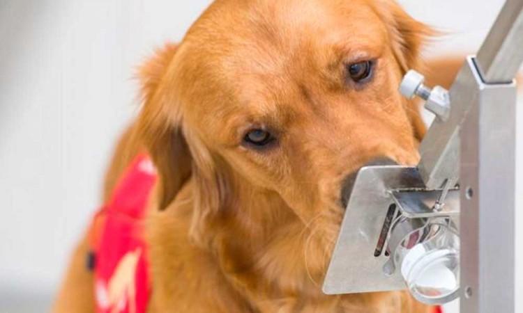 ¡Lomitos contra el covid! Perros detectores debutarán en una feria de Miami