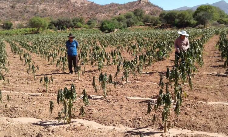 América y el Caribe impulsarán la voz de los agricultores en cumbre global alimentaria