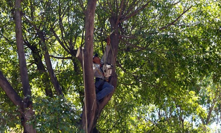Padece Tehuacán pérdida de árboles endémicos