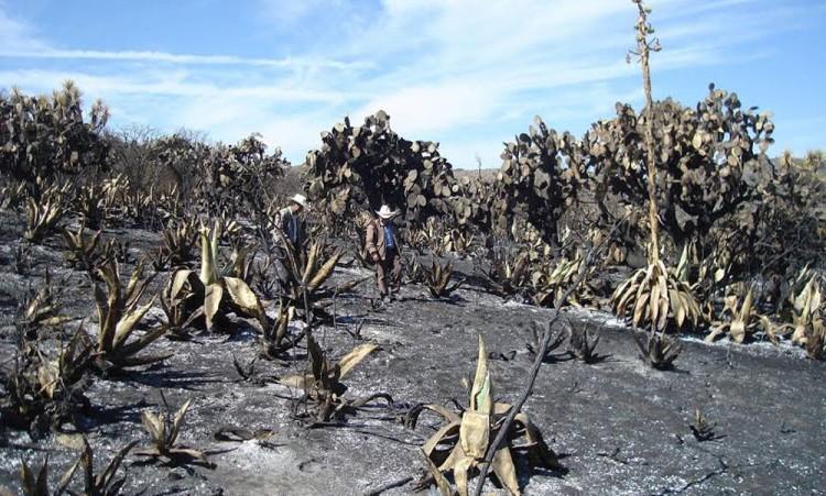 Registra reserva de Tehuacán cuatro incendios en 2017