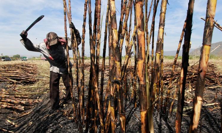 Disminuyen quemas no programadas de cañas en Chietla