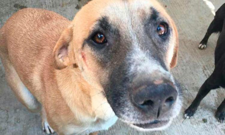 Rescatan a canes maltratados