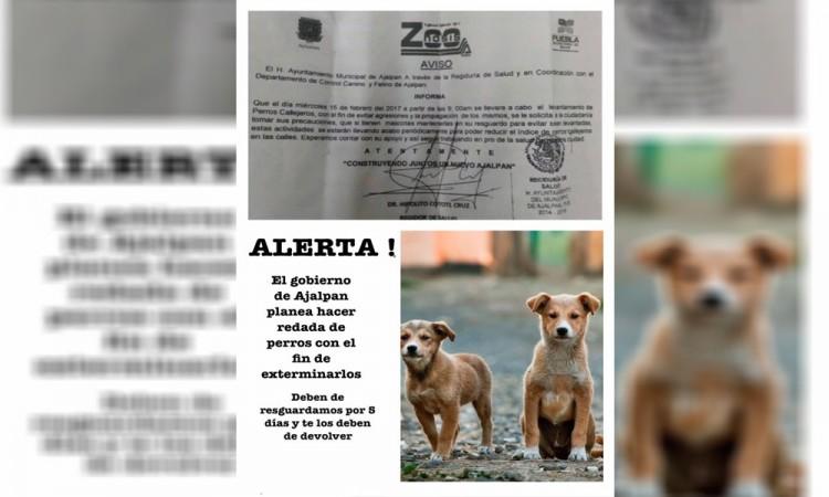 Llaman a resguardar a perros callejeros en Ajalpan