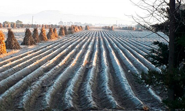 Heladas cubren cultivos poblanos