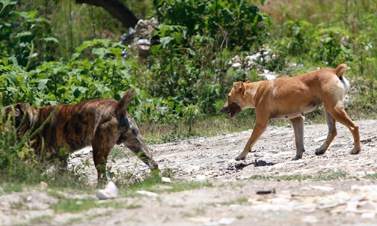 Resurge envenenamiento de perros en Tehuacán