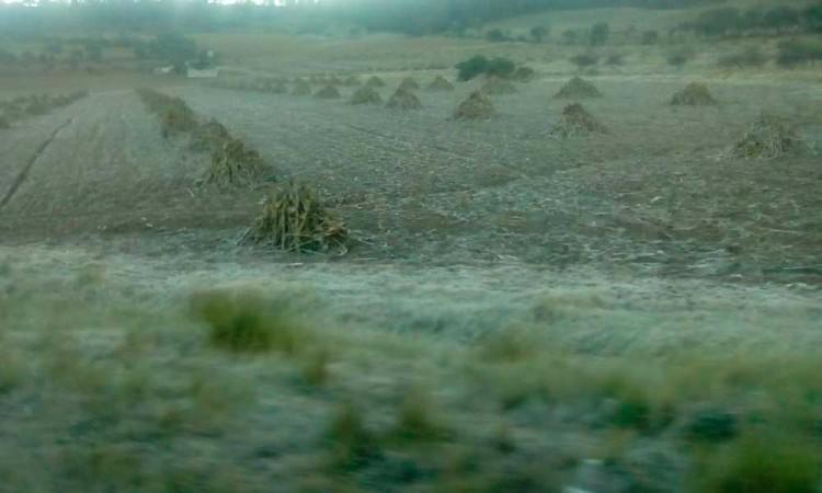 Afectan heladas a 120 hectáreas de cultivos en Libres
