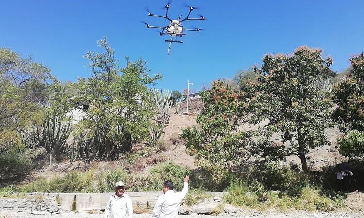 Usan tecnología para mejorar producción de mango y ciruela en Xayacatlán
