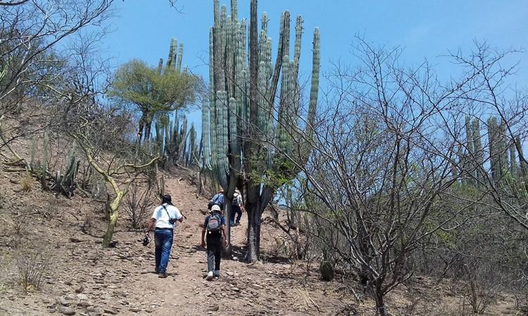 Detienen a saqueador de plantas endémicas en la Reserva de la Biosfera