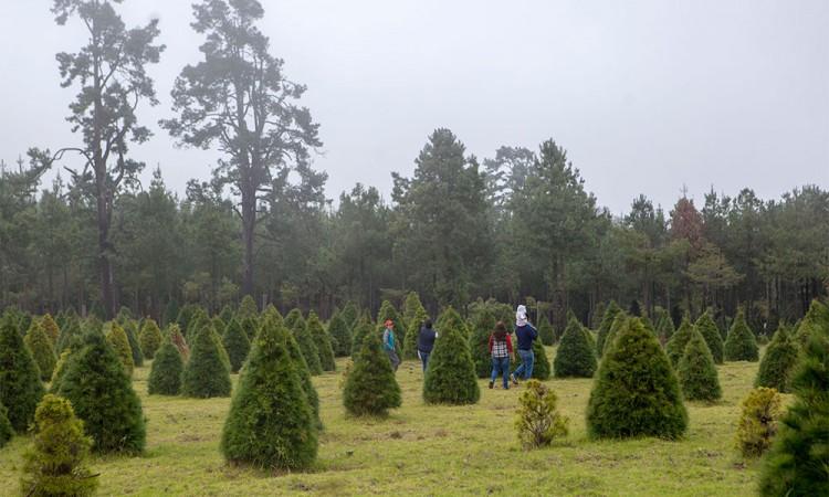 [Fotorreportaje] Ahuazotepec, donde la Navidad se hace sustentable
