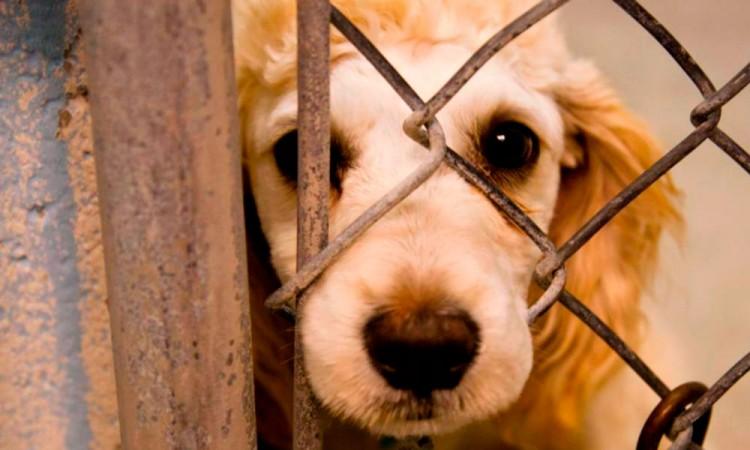 Sin respetarse, Ley de Bienestar animal en el estado