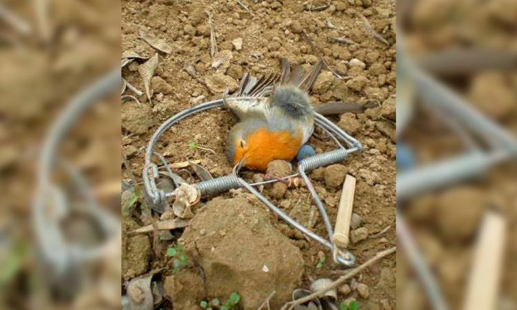 Pobladores reportan caza ilegal de aves silvestres