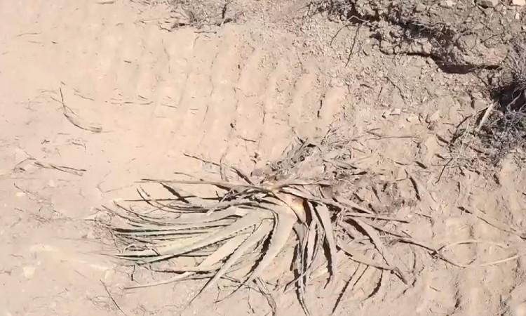 Obras de alcantarillado causa daño ecológico en Tehuacán