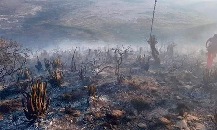 En riesgo, 10 municipios por incendios forestales