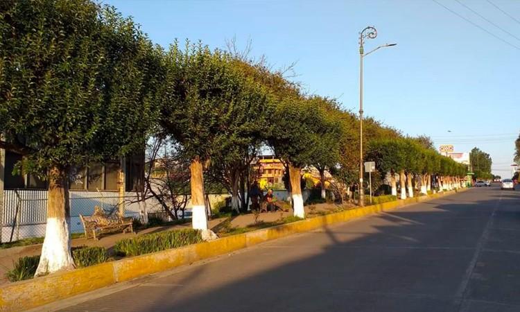 Vecinos impiden el corte de 150 árboles en Huauchinango