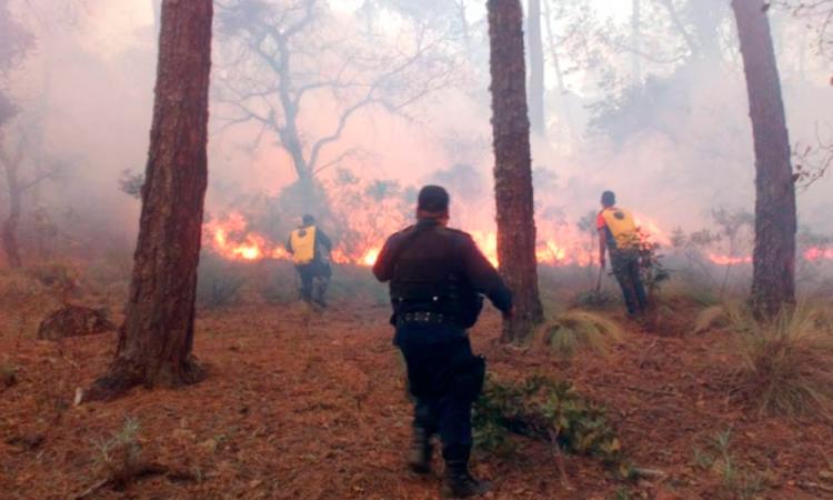 Arrasa incendio con 160 hectáreas en Chignautla