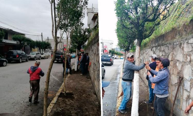 Desplantan 150 árboles de vialidad en Huauchinango