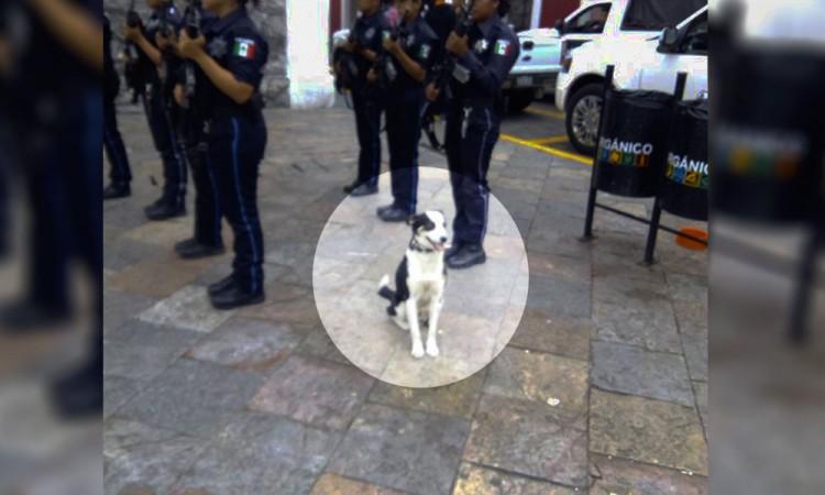 Envenenan a Ktarino, perro policía de Atlixco