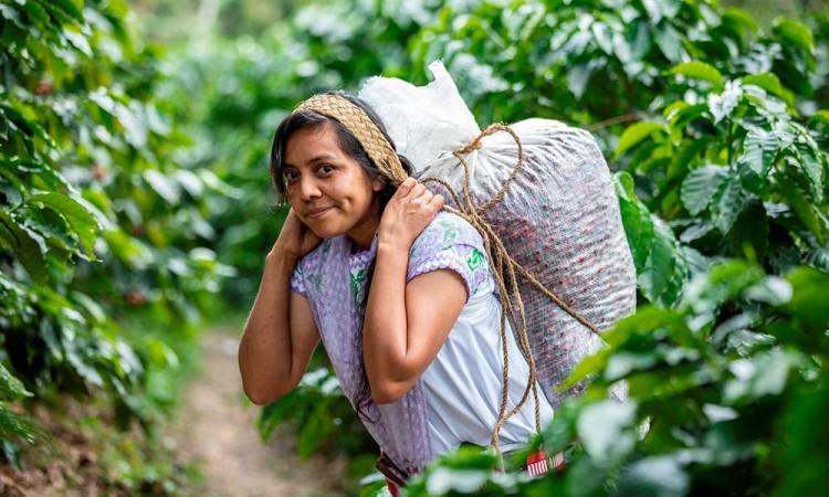 Poblanas se empoderan a través del cultivo de café