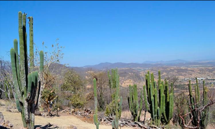 Denuncian abandono del campo mixteco