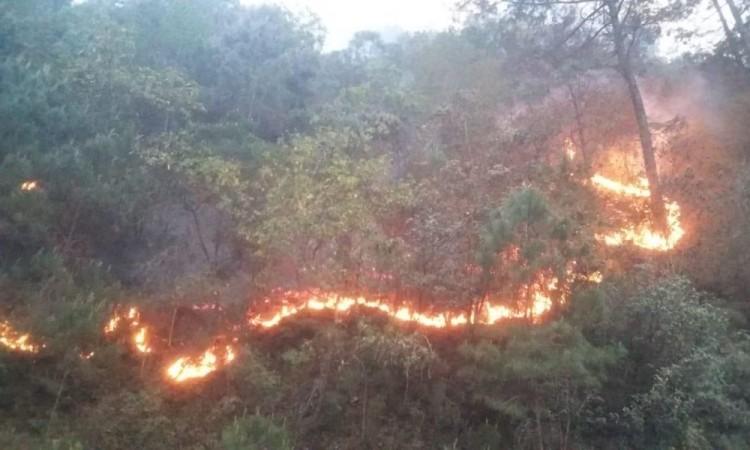 Controlado al 50 por ciento incendio en Yehuala