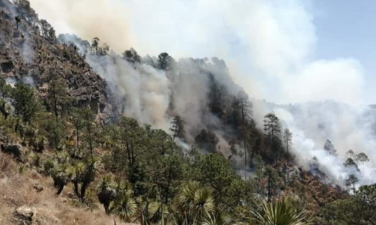 Altas temperaturas incendian bosques; en Puebla se reportan cinco