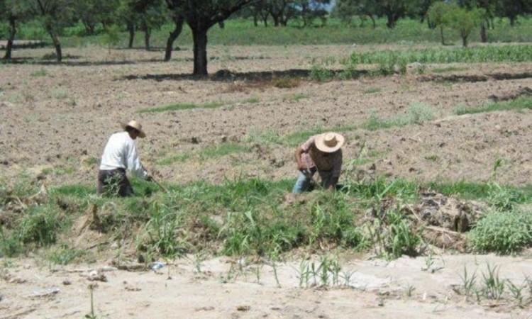Más de 120 hectáreas perdidas registra la región de Tehuacán por covid-19