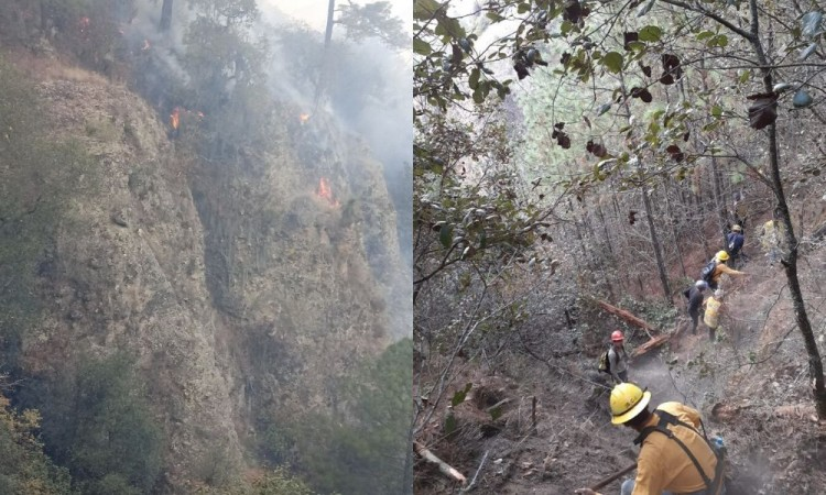 Afectan incendios forestales 51 municipios