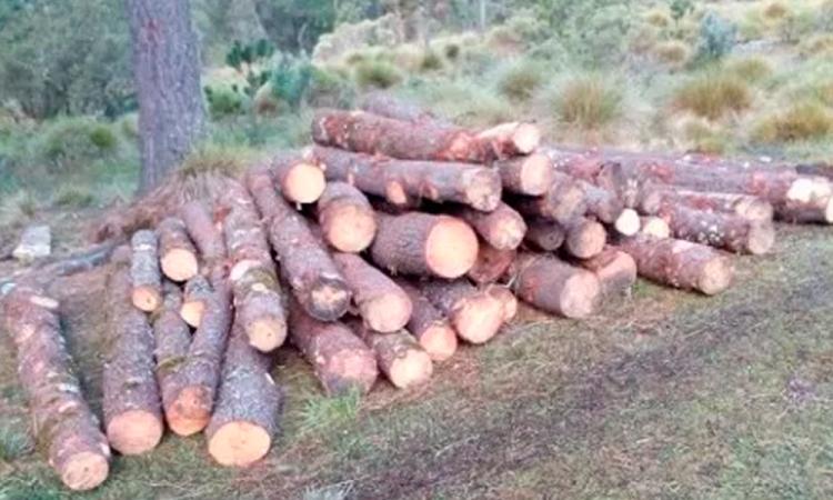 Detienen pobladores a camión con madera clandestina en Ixtacamaxtitlan