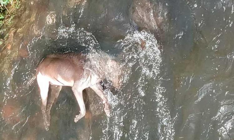 Aparecen perros muertos en ríos de Atlixco