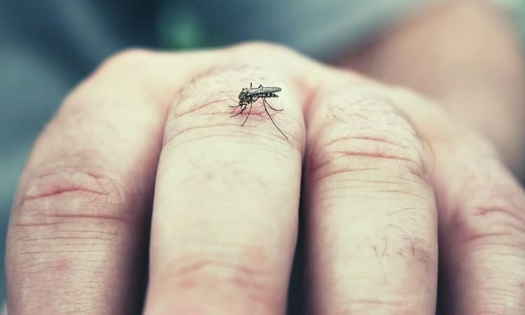No se ha presentado ningún caso de dengue hemorrágico.