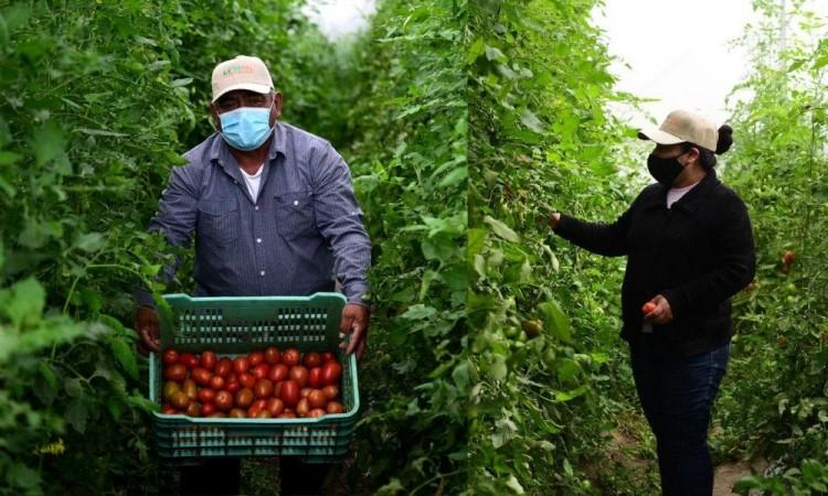 El proyecto de invernaderos es parte del apoyo de la empresa Granjas Carroll de México.