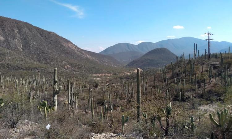 Alerta Reserva de la Biosfera sobre venta ilegal de lotes