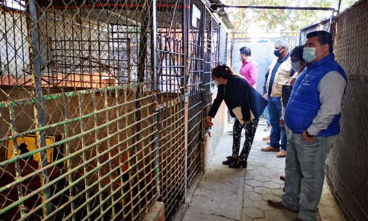 Perrera municipal de Atlixco ya no sacrificará perros, se entregarán a animalistas para darlos en adopción