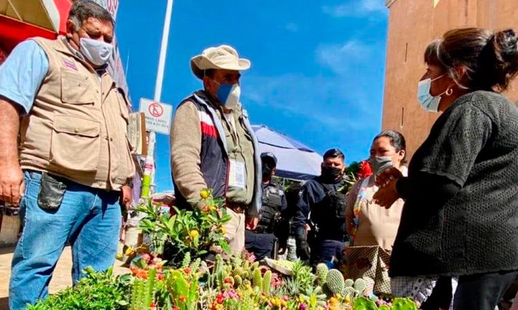 Decomisan 276 especies endémicas en operativo a mercados de Tehuacán