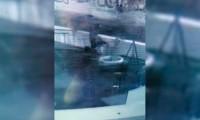 ¡Hasta las palmeras en los parques de Atlixco se roban!