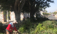 Vecinos de Chapulapa, en Atlixco detuvieron tala de árboles por parte del Ayuntamiento